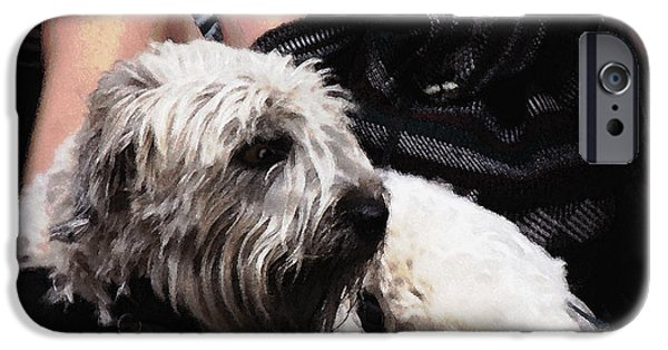 Puppies iPhone Cases - Jazzed Pooch iPhone Case by Phil Welsher