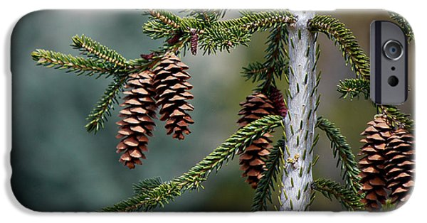 Becky Photographs iPhone Cases - #johnmuir iPhone Case by Becky Furgason