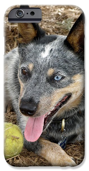 Dog And Tennis Ball iPhone Cases - Josie iPhone Case by Lainie Wrightson