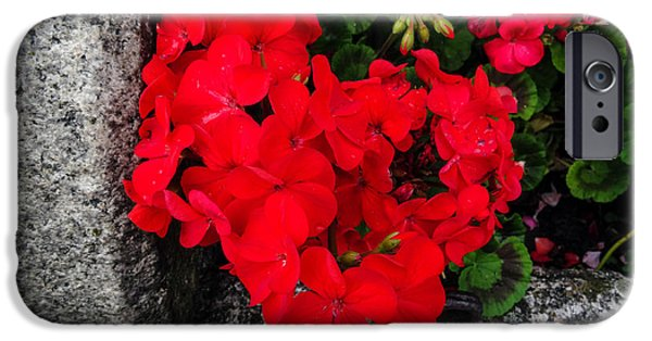 July iPhone Cases - July Flower Twenty Three iPhone Case by Martin Wall