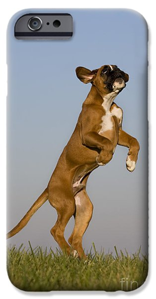 Boxer iPhone Cases - Jumping Boxer Puppy iPhone Case by Jean-Louis Klein & Marie-Luce Hubert
