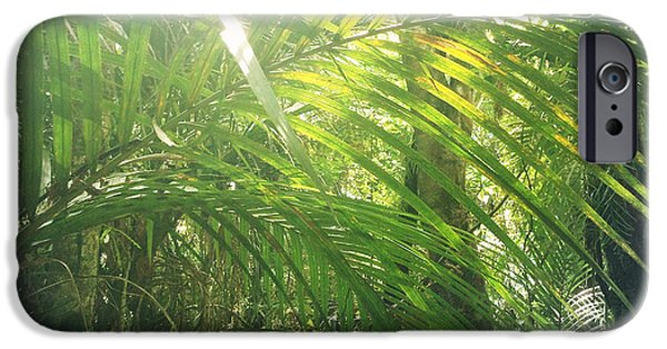 Rain iPhone Cases - Jungle sunlight iPhone Case by Les Cunliffe