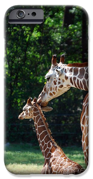 Pictures Of Cats Photographs iPhone Cases - Just A Little Nudge iPhone Case by Skip Willits