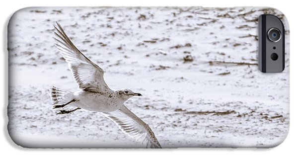 Flying Seagull iPhone Cases - Just above the sand iPhone Case by Chris Bordeleau