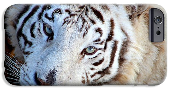 Wild Animals iPhone Cases - Just Call Me Gorgeous iPhone Case by Fiona Kennard