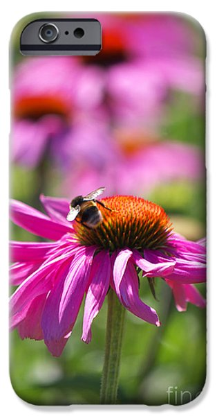 Just Pink  iPhone Case by Angela Doelling AD DESIGN Photo and PhotoArt