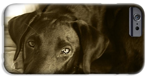 Chocolate Lab iPhone Cases - Just Taking a Break iPhone Case by Roger Wedegis