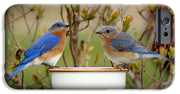 Bluebird iPhone Cases - Just the Two of Us iPhone Case by Bill Pevlor