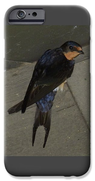 Barn Swallow iPhone Cases - Juvenile Barn Swallow iPhone Case by Marsha Camblin