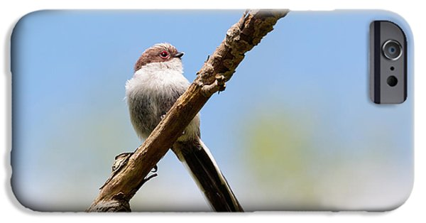 Matting iPhone Cases - Juvenile long tailed tit iPhone Case by Katey jane Andrews