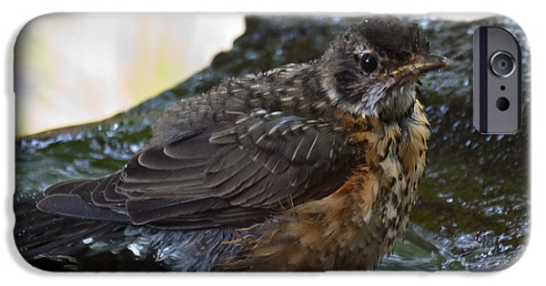 Young iPhone Cases - Juvenile Robin  iPhone Case by Beth Wolff