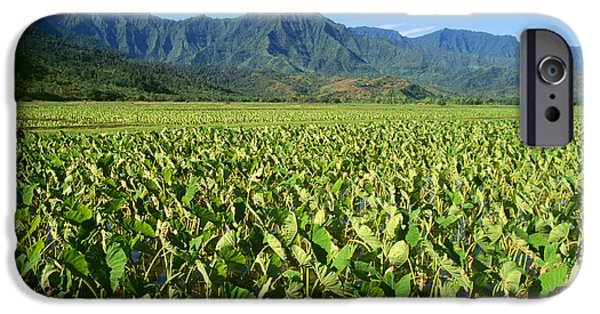 Reflection Harvest iPhone Cases - Kauai, Wet Taro Farm iPhone Case by Himani - Printscapes