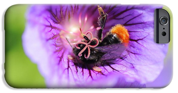United iPhone Cases - Keen Pollinator iPhone Case by Rumyana Whitcher