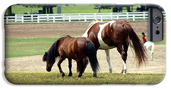Farm Tapestries - Textiles iPhone Cases - Kentucky Horse Park - Horses Grazing 3 iPhone Case by Thia Stover