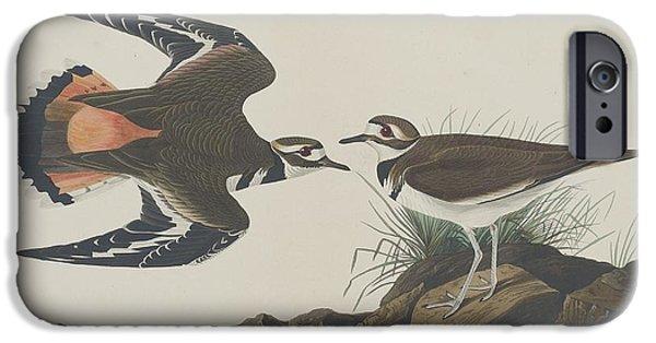Shorebird iPhone Cases - Kildeer Plover iPhone Case by John James Audubon