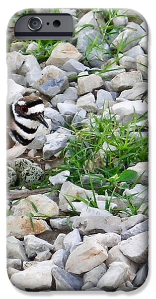 Killdeer 1 iPhone Case by Douglas Barnett