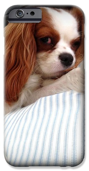 Puppies iPhone Cases - King Charles Cavalier 2 iPhone Case by Marlene Burns