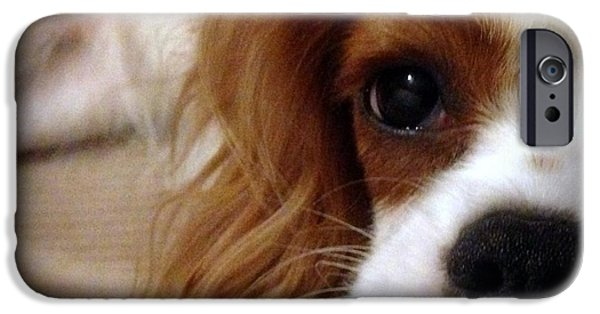 Puppies iPhone Cases - King Charles Cavalier 3 iPhone Case by Marlene Burns