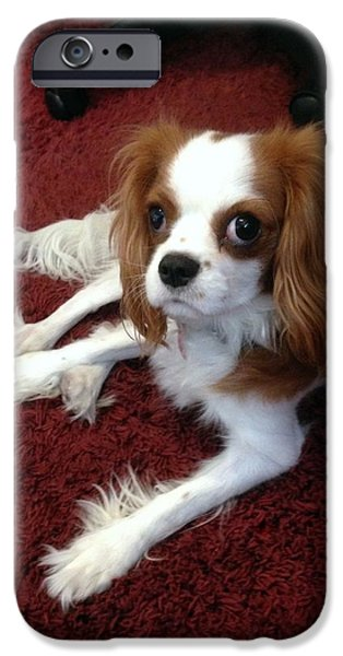 Puppies iPhone Cases - King Charles Cavalier iPhone Case by Marlene Burns