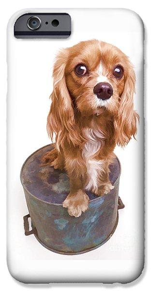 Cute Puppy iPhone Cases - King Charles Spaniel Puppy iPhone Case by Edward Fielding