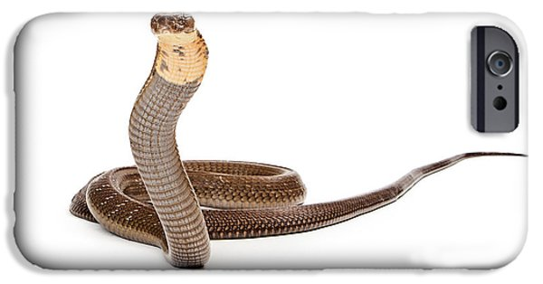Serpent Photographs iPhone Cases - King Cobra Snake Looking Into Camera iPhone Case by Susan  Schmitz