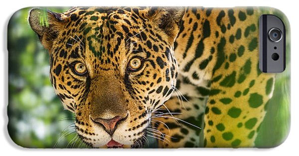 Strong America iPhone Cases - King of the Forest iPhone Case by Jamie Pham