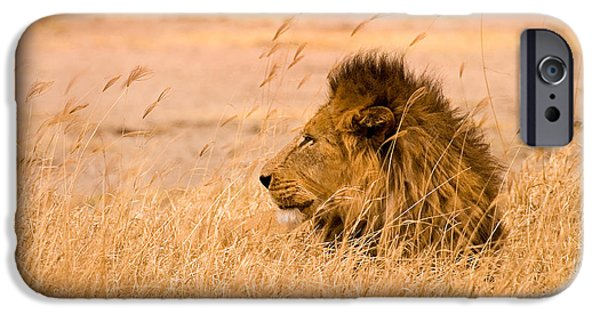 Lion Art iPhone Cases - King of The Pride iPhone Case by Adam Romanowicz