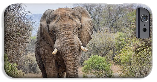 Elephants iPhone Cases - King of the Road iPhone Case by Stephen Stookey