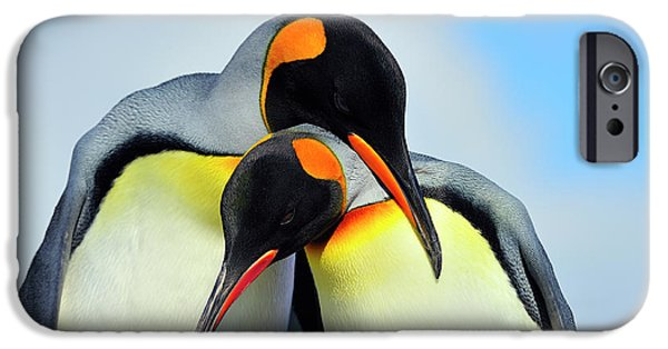Bonding iPhone Cases - King Penguin iPhone Case by Tony Beck