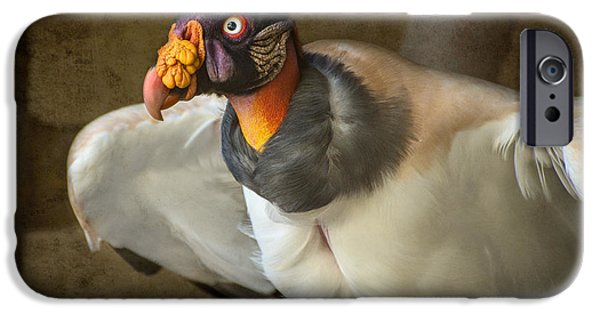 Vulture iPhone Cases - King Vulture iPhone Case by Jamie Pham