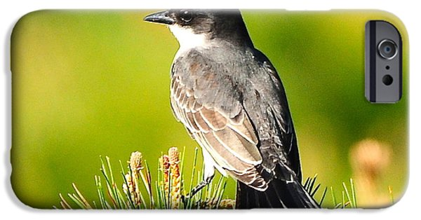 Pines iPhone Cases - Kingfisher  iPhone Case by Daniel Nowak