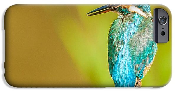 Animals Photographs iPhone Cases - Kingfisher iPhone Case by Paul Neville