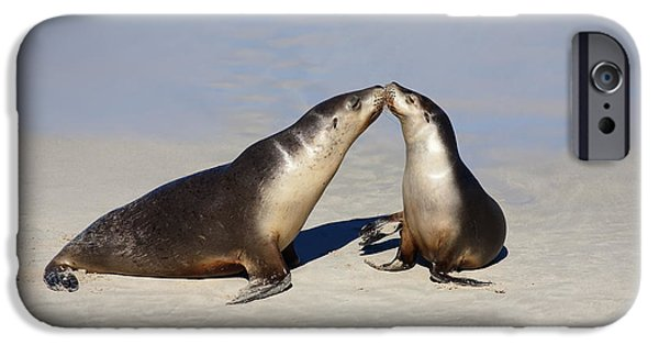 Sea Lions iPhone Cases - Kiss iPhone Case by Mike  Dawson