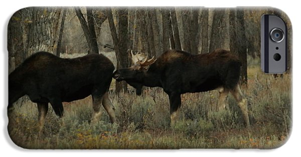 Bull Moose iPhone Cases - Kissing but iPhone Case by Jeff  Swan