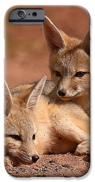 Kit Fox Pups On A Lazy Day iPhone Case by Max Allen