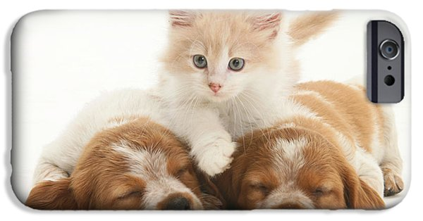 Spaniel Puppy iPhone Cases - Kitten And Puppies iPhone Case by Jane Burton
