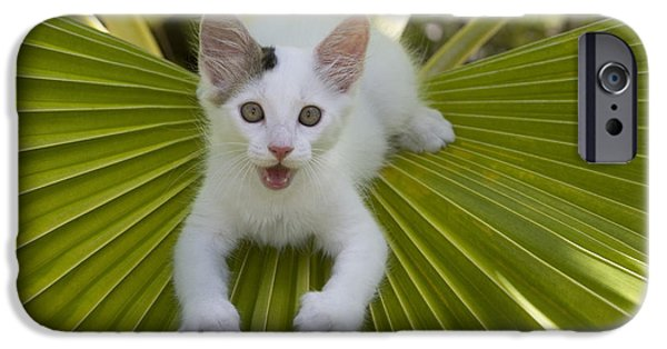 French Open iPhone Cases - Kitten On A Palm Frond iPhone Case by Jean-Louis Klein & Marie-Luce Hubert