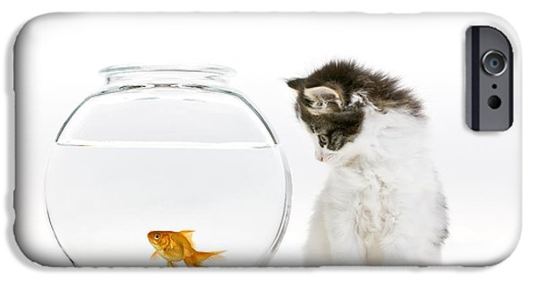 Cut-outs iPhone Cases - Kitten Watching A Goldfish iPhone Case by Jean-Louis Klein & Marie-Luce Hubert