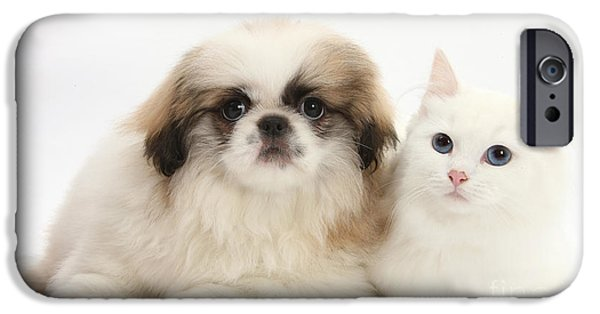 Domesticated Animals iPhone Cases - Kitten With Pekinese Puppy iPhone Case by Mark Taylor
