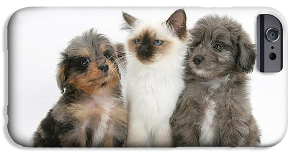 Domesticated Animals iPhone Cases - Kitten With Puppies iPhone Case by Mark Taylor