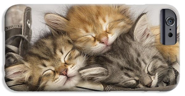 Innocence iPhone Cases - Kittens Asleep On Shoes iPhone Case by Jean-Michel Labat