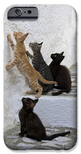Litter Mates iPhone Cases - Kittens Chasing Woodlouse iPhone Case by Jean-Louis Klein & Marie-Luce Hubert