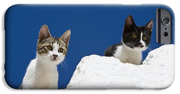 Litter Mates iPhone Cases - Kittens On A Greek Island iPhone Case by Jean-Louis Klein & Marie-Luce Hubert