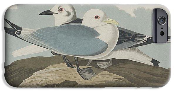 Shorebird iPhone Cases - Kittiwake Gull iPhone Case by John James Audubon