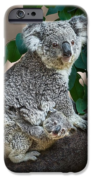 Koala iPhone Cases - Koala Joey and Mom iPhone Case by Jamie Pham