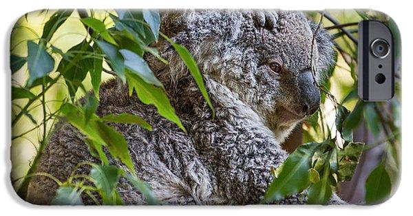 Koala iPhone Cases - Koala Joey iPhone Case by Jamie Pham