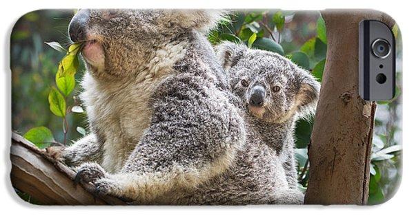Koala iPhone Cases - Koala Joey on Mom iPhone Case by Jamie Pham