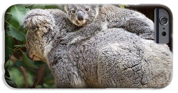 Koala iPhone Cases - Koala Joey Piggy Back iPhone Case by Jamie Pham