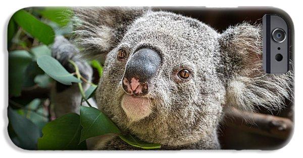 Koala iPhone Cases - Koala Male Portrait iPhone Case by Jamie Pham