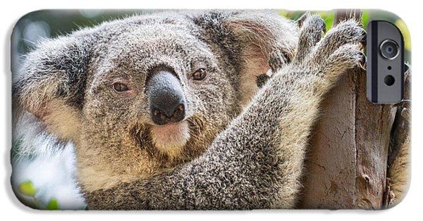 Koala iPhone Cases - Koala on Tree iPhone Case by Jamie Pham